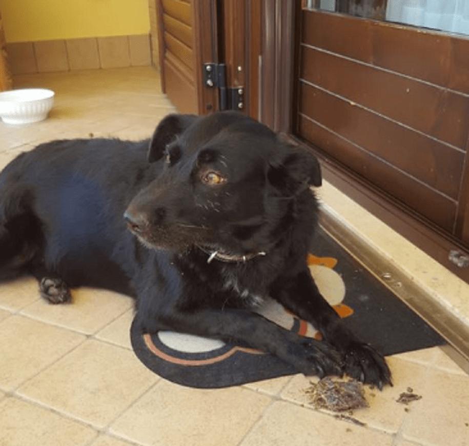 cane veglia padrone morto