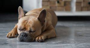 sordità cani