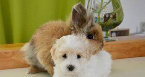 convivenza cane coniglio