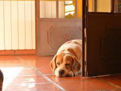 cane uscire