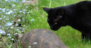 cani gatti tartarughe