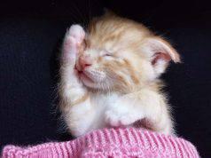 quanto dorme un gatto