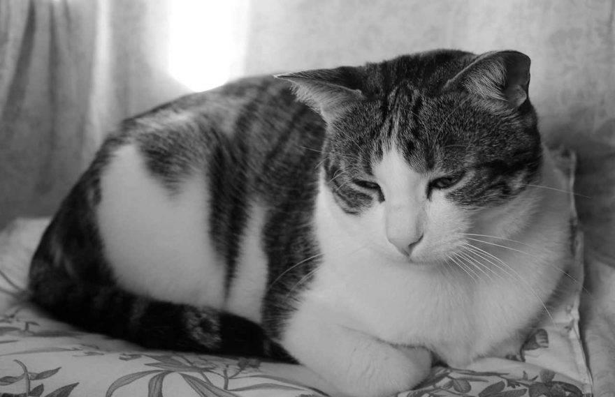 Memoria del gatto
