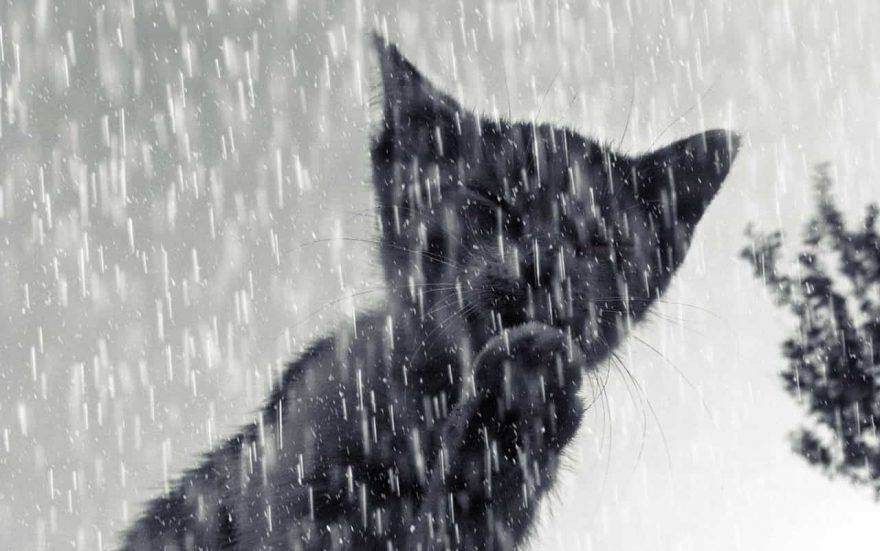 gatto pioggia