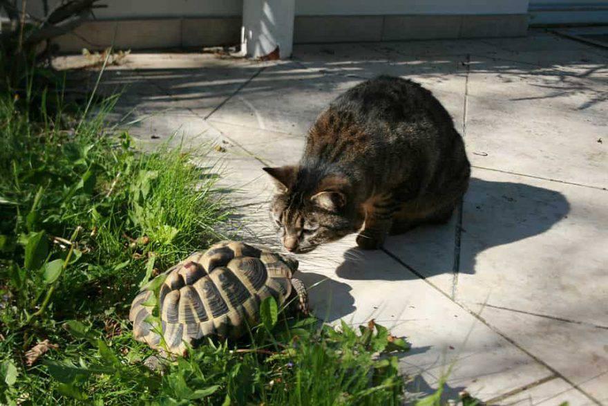 gatto e tartaruga