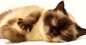 Infezioni nel gatto