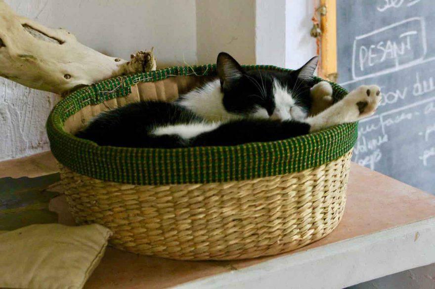 gatto adulto dorme