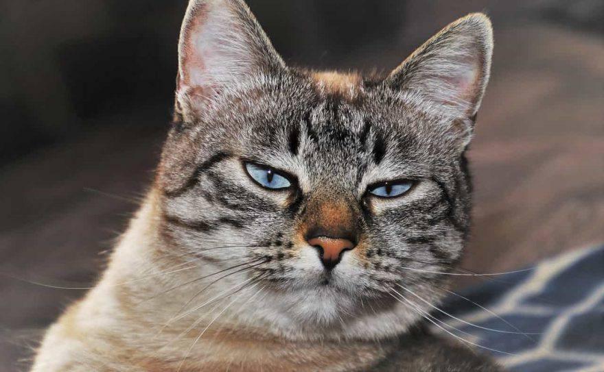 gatto offeso dopo le vacanze
