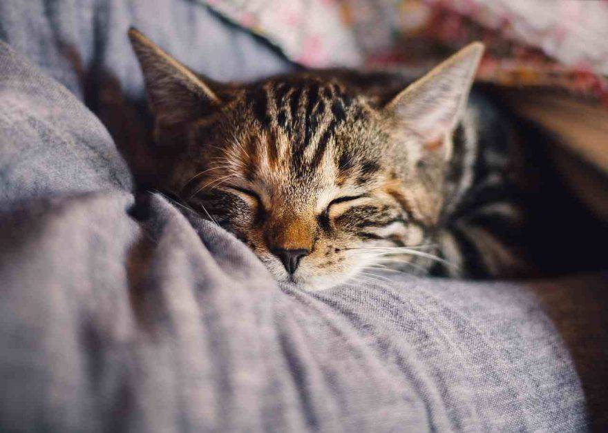 Il gatto stanco
