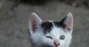 gattino cambia denti