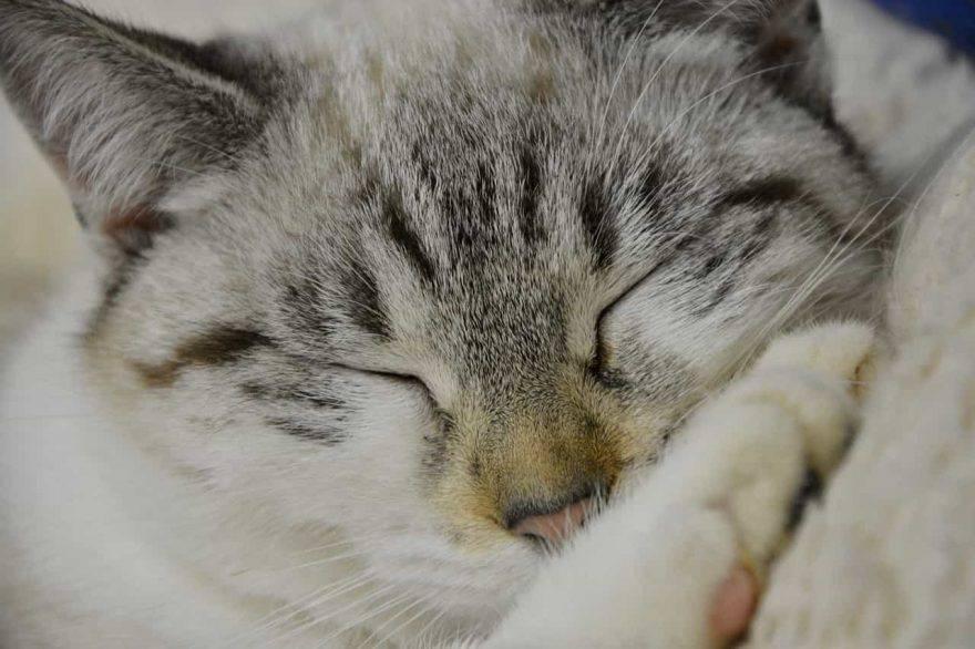 gatto anziano sonno