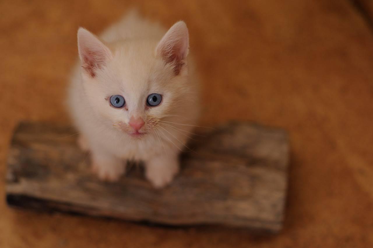 Nomi per gatti bianchi