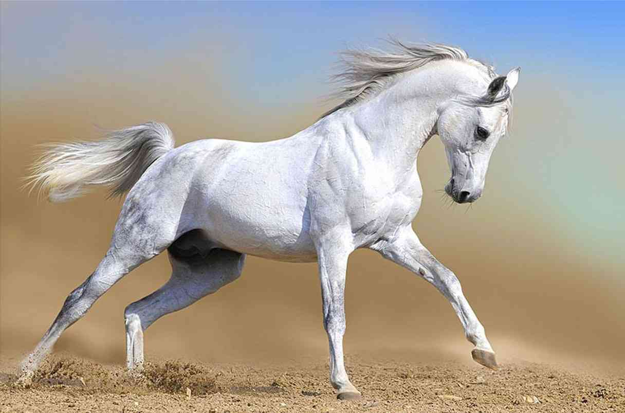 curiosità cavallo