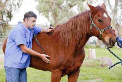 malattie trasmissibili dal cavallo