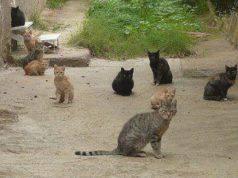 colonia felina mutilata