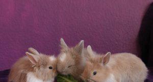 alimentazione coniglio