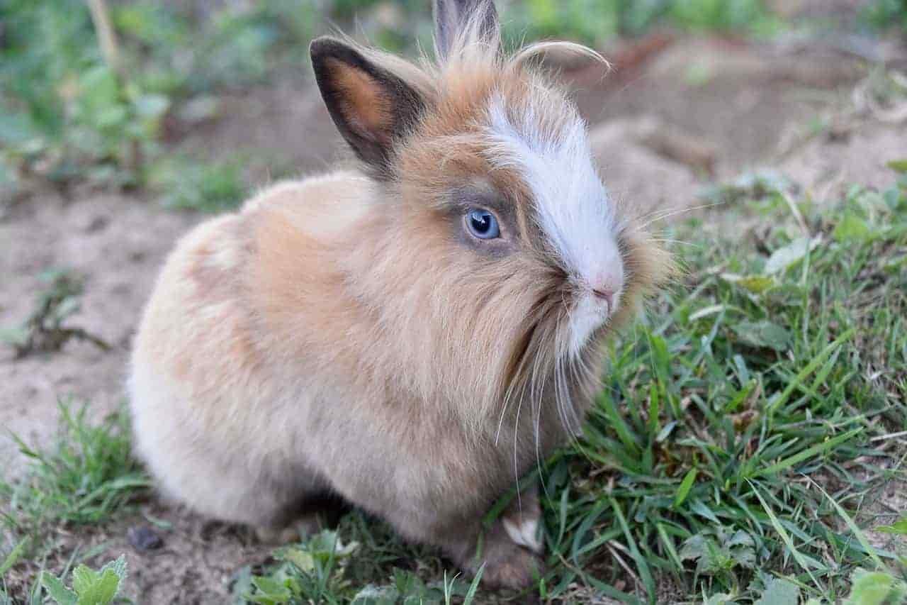 vedono conigli