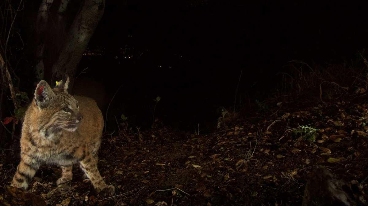 cosa fa il gatto di notte? Ecco tutta la verità (foto Pixabay)