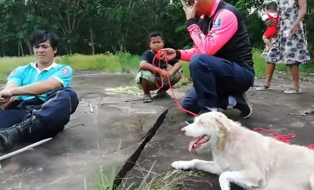 soccorso cuccioli