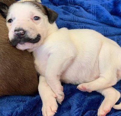 Cucciolo con i baffi