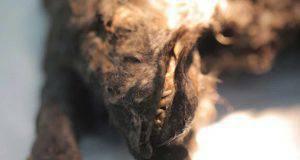 cucciolo pleistocene