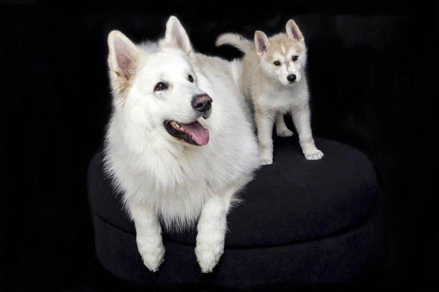 cucciolo cane adulto