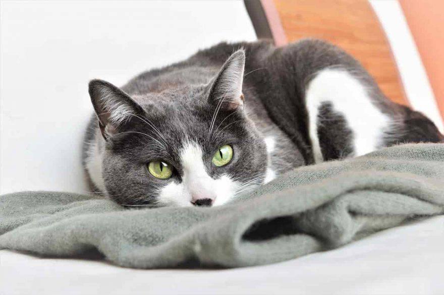 sintomi tumore gatto