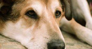 cane triste cause e soluzioni