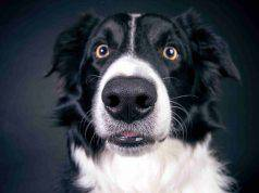 Feromoni per cani