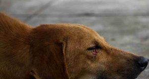 Disinfettare il cane