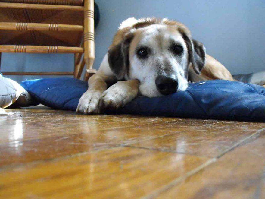 cane triste dopo le vacanze