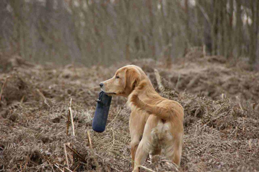 Memoria del cane
