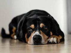 cane al rientro dalla pensione
