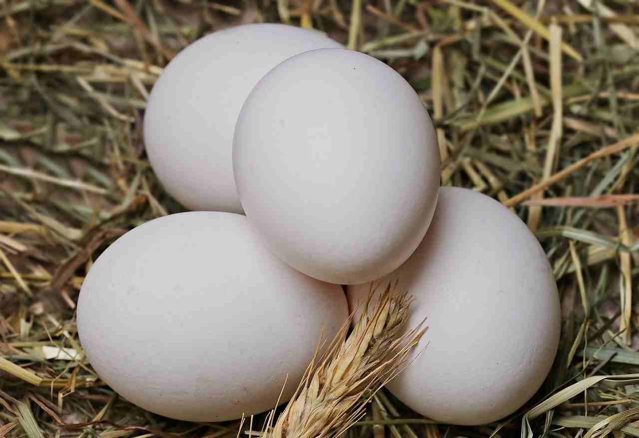 quantità uova cane