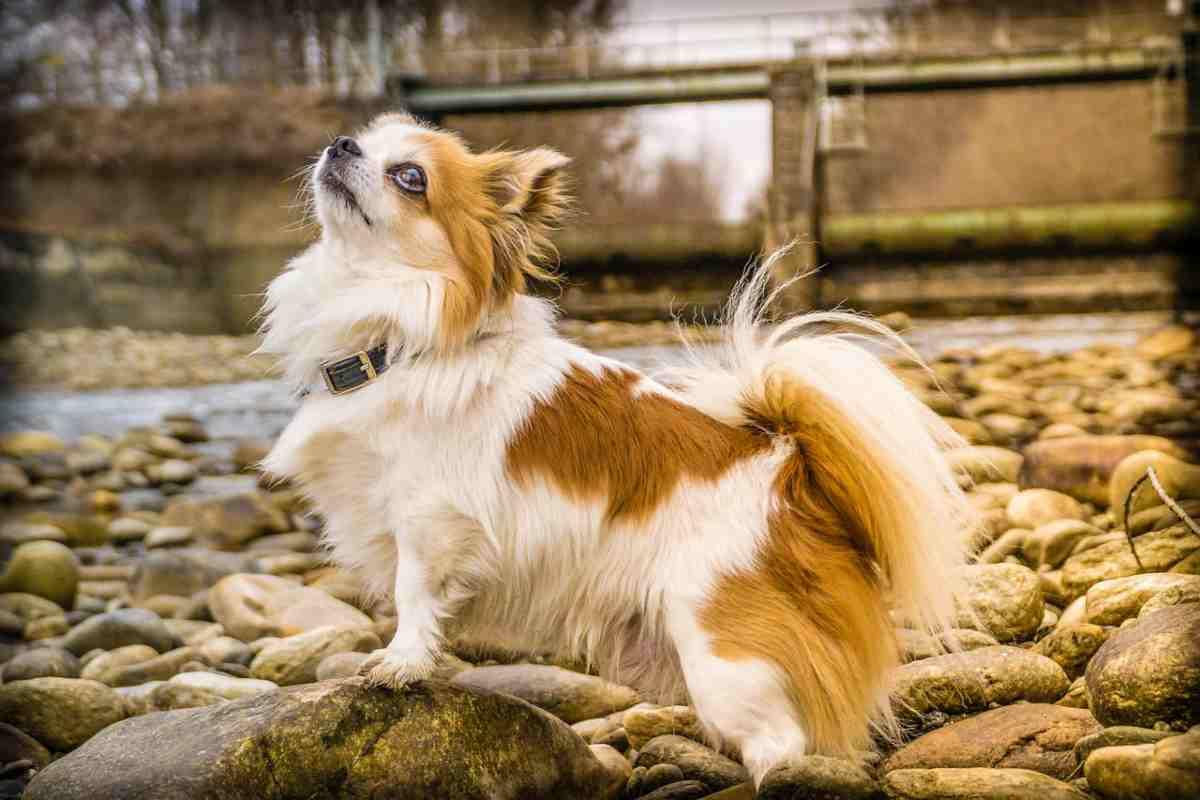 Fino a che età può crescere il cane (fonte Pixabay)