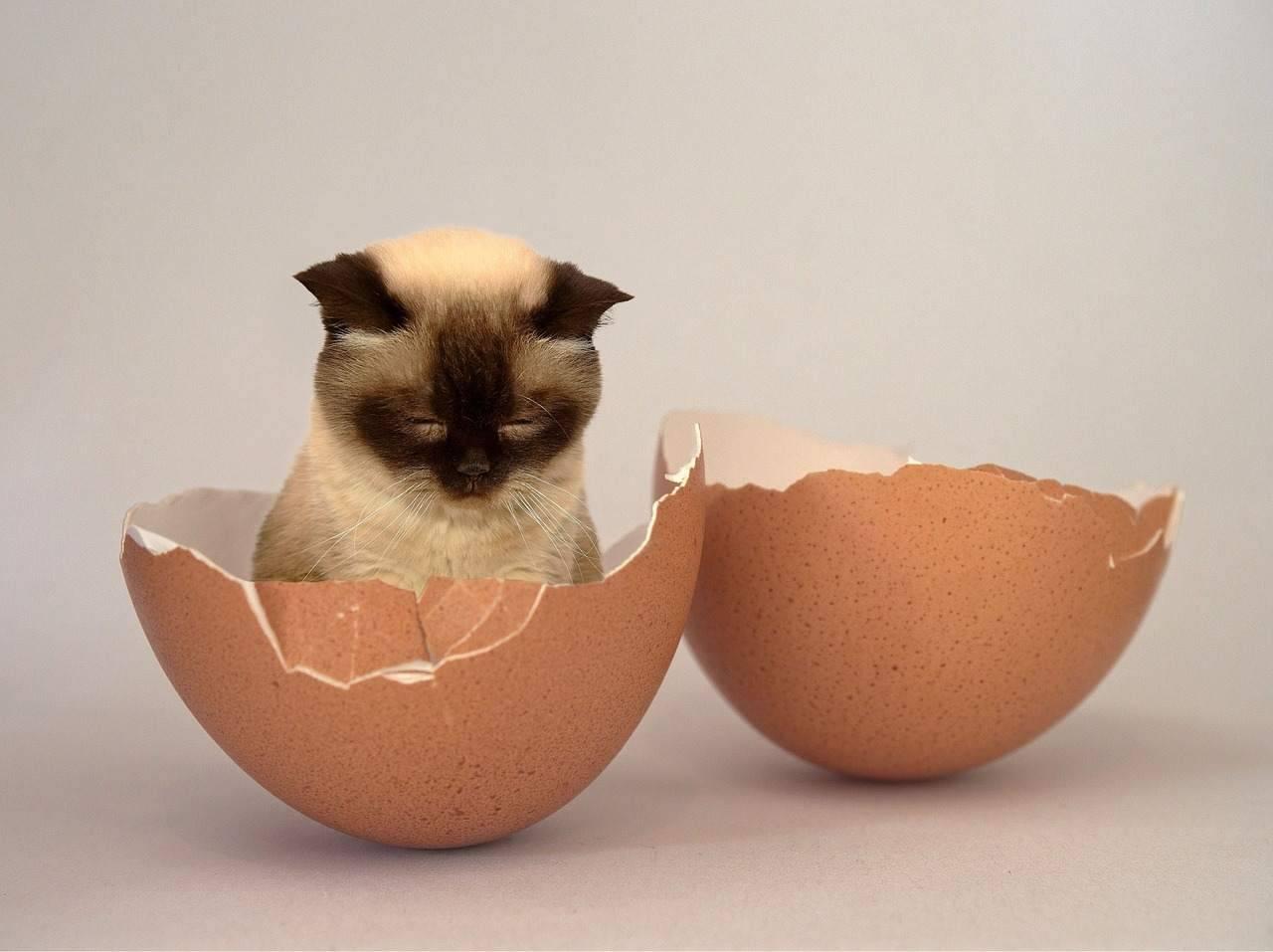 gatto ricetta uova tonno