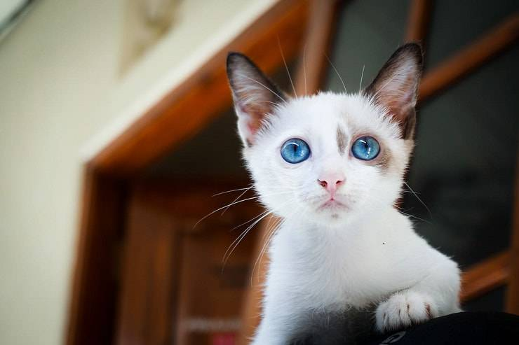 gattino abbandonato