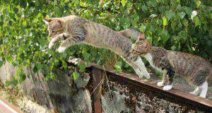 gatto cade sempre in piedi (fonte Pixabay)