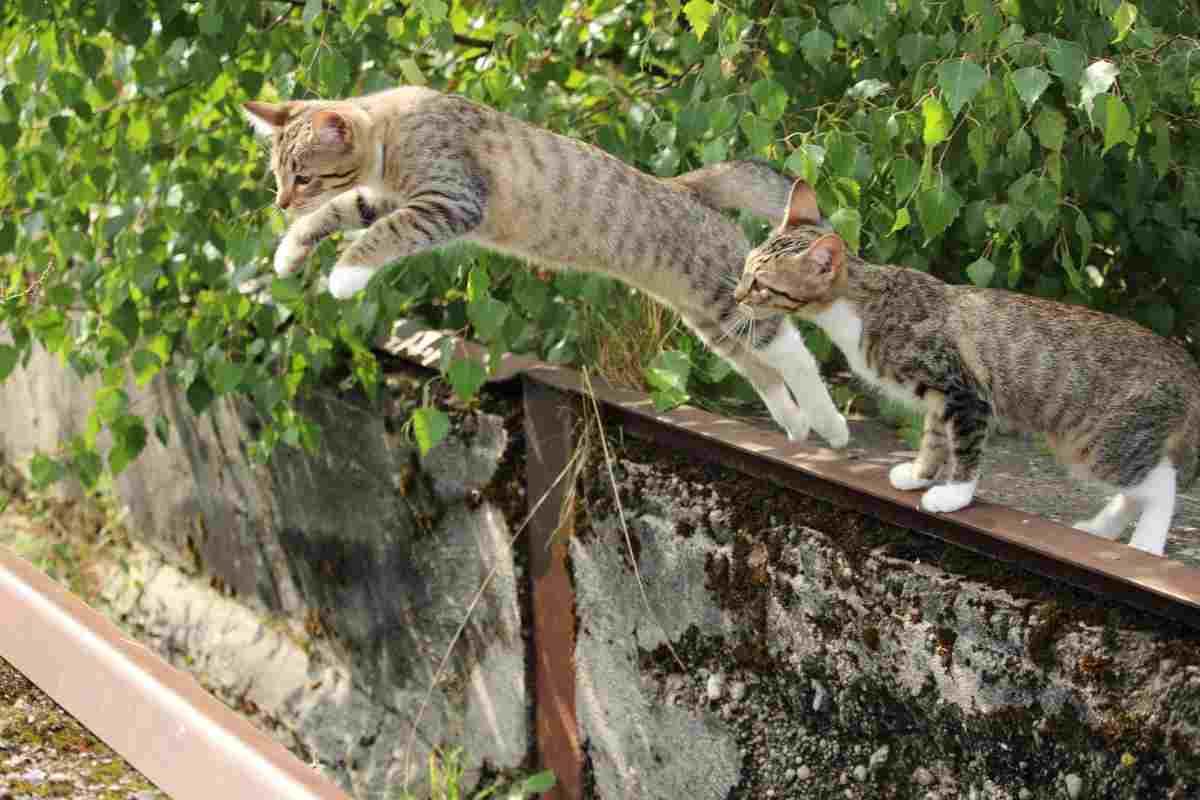 i gatti cadono sempre in piedi? Mito o realtà (fonte Pixabay)