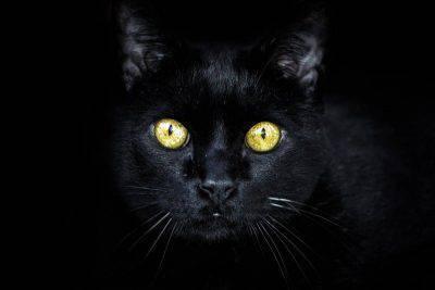 gatto nero (foto Pixabay)