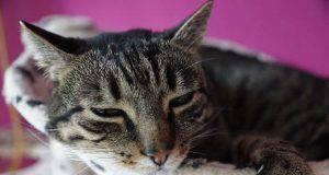 dolore gatto