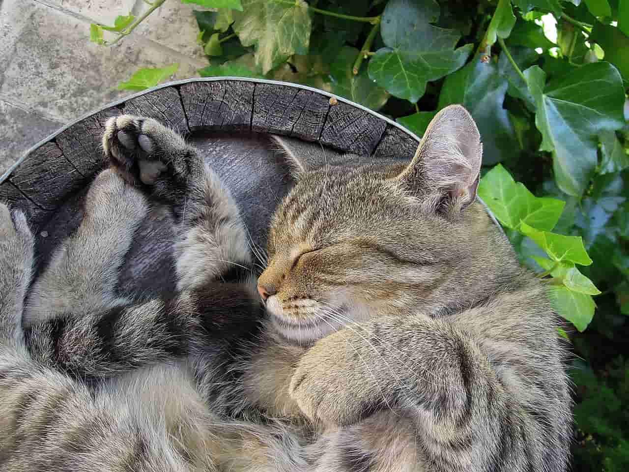 gatto trema dorme