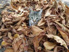 gatto autunno