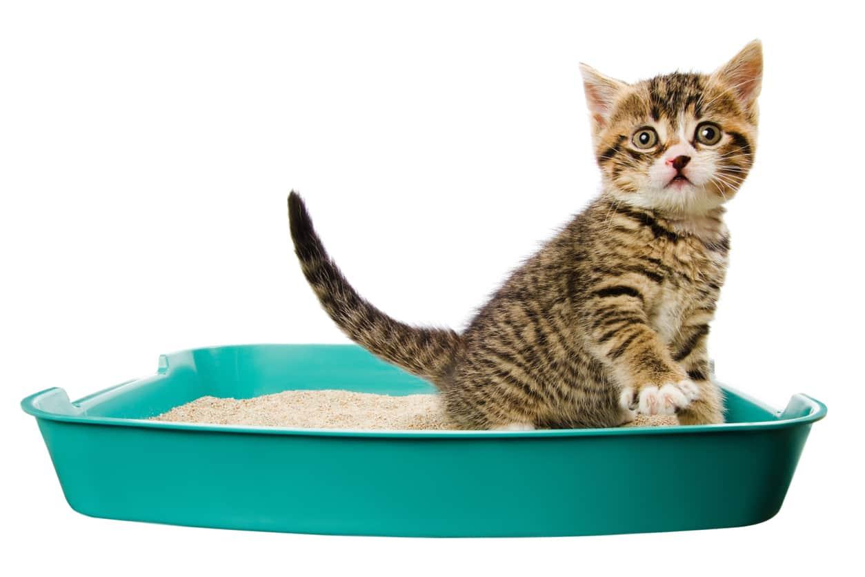 gatto diarrea