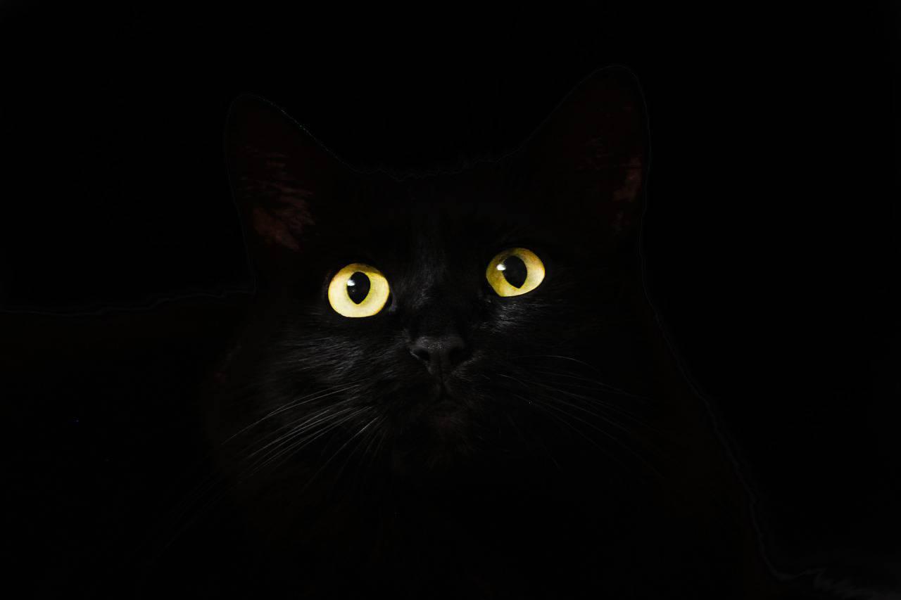 Pulire occhi gatto