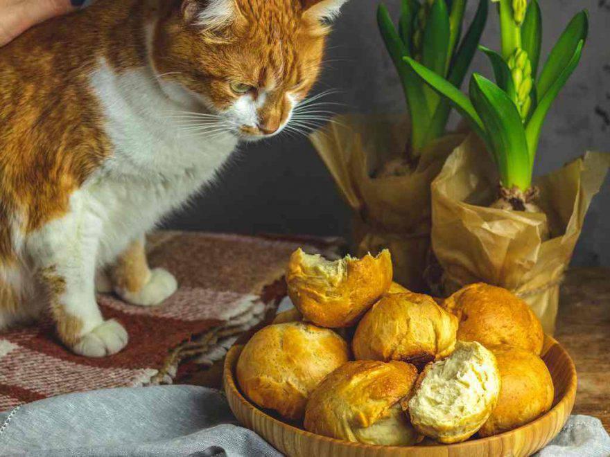 gatto pane