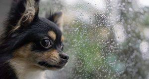 cosa fare con il cane quando piove