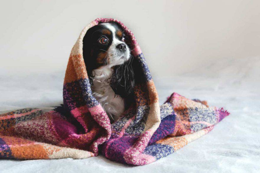 raffreddore cane