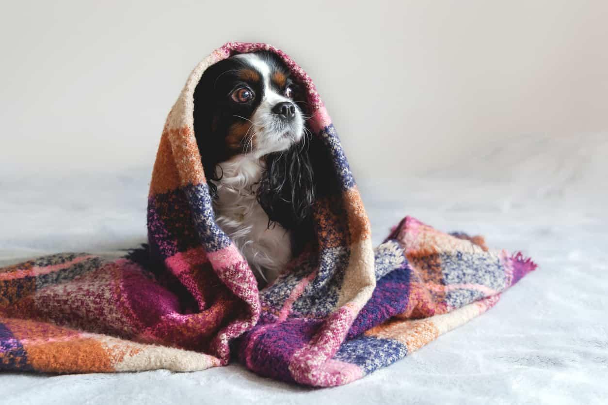 cure naturali cane raffreddato