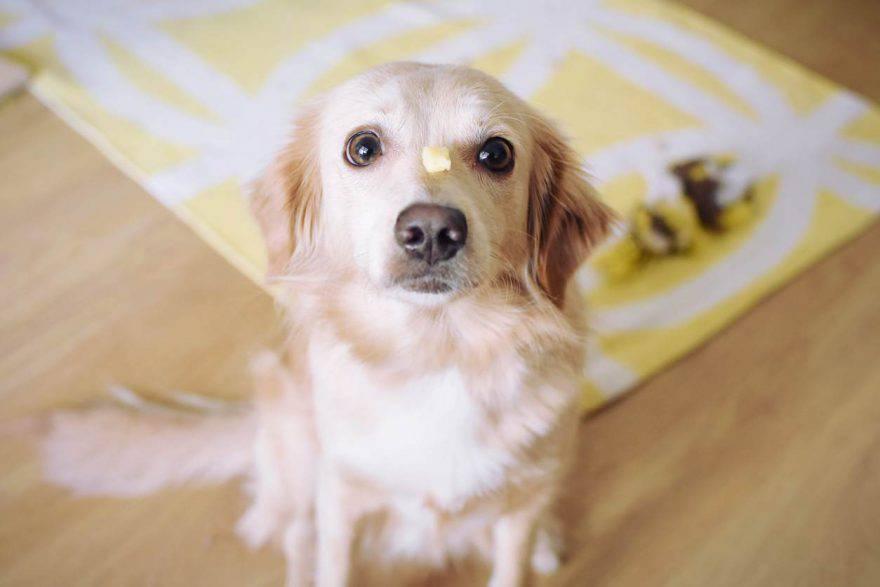 cane formaggio